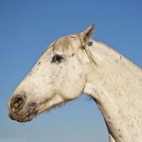 N°121 - Cheval peureux
