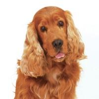 Fleurs de Bach pour chiens